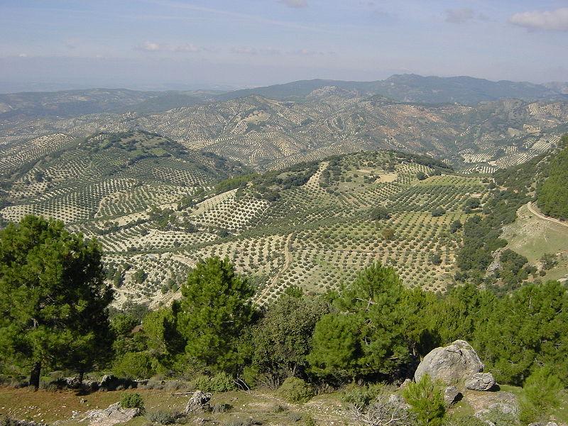 bloedbr olijfgaard provincie Jaen